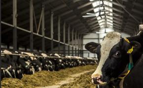 Евросоюз постепенно откажется от содержания животных в неволе