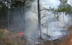 В Минприроды предприняли меры для исключения повторения произошедших в 2010 году торфяных пожаров