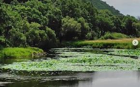 Лотосы под Шмаковкой в Приморье могут исчезнуть из-за толп туристов