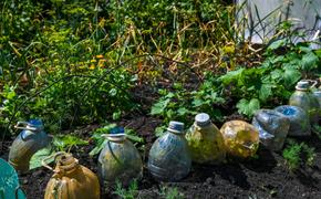 В Челябинске почти в 1,5 раза вырос спрос на садовые товары