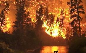 Площадь лесных пожаров в Карелии возросла до 11 тысяч га