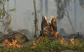 Российские самолеты Бе-200 задействованы в тушении лесных пожаров на юге Турции