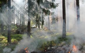 В 12 провинциях Турции власти ввели запрет на посещение лесных массивов в связи с пожарами