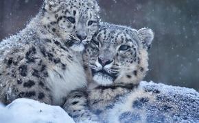 С 1 августа вступают в силу поправки к закону «Об охоте и о животном мире», которые позволят убивать краснокнижных животных