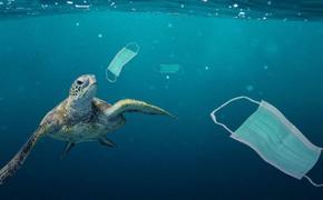Полтора миллиарда одноразовых масок попало в океан в 2020 году, на их разложение потребуется 450 лет