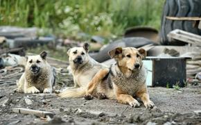 О «собачьих» законах: как люди и псы терроризируют друг друга и что с этим делать