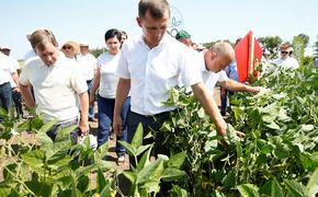 Новая субсидия в помощь аграриям планируется на Кубани