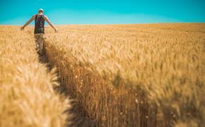 Подорожание пшеницы может вызвать новый скачок инфляции