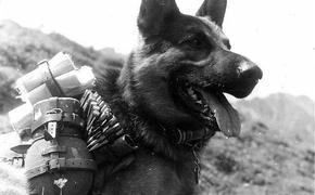Клыки против штыков: подвиг собак в Великой Отечественной войне
