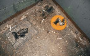 Жилой дом в Риге оккупировали крысы