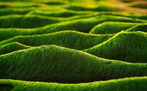 Учёные: почему водоросли стали причиной пермского вымирания