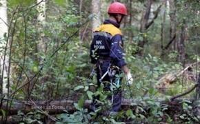 Три женщины-туристки пропали в окрестностях горы Фалаза в Приморье