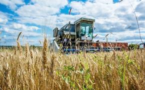 Урожай-2021 в Нижегородской области: темп очень хороший