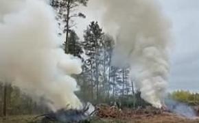 В Тверской области идёт нещадная вырубка реликтовых лесов