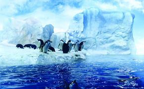 Ни одна экоинициатива не стала международным соглашением по защите морей Антарктиды