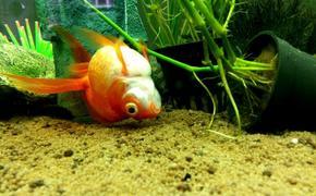 В Саратове массово гибнут аквариумные рыбки, причина в воде
