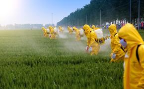 Распространённые в мире пестициды способствует ожирению и влияют на обмен веществ