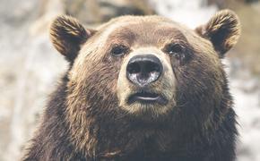 Латвия: не так просто справиться с русским медведем