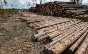 Из заказника под Томском украли лес, а наказанных нет