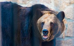 В Челябинске из-за отравления мишек в зоопарке завели уголовное дело