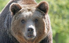 В цирке в Орле медведь напал на дрессировщицу во время выступления
