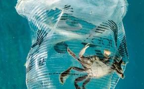 Guardian: в мировом океане появилась новая экосистема – «пластисфера»