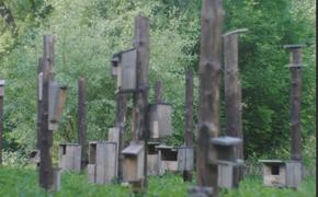 В Бельгии на экокладбище строят вместо надгробий скворечники
