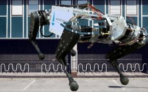 В МГУ представили первого российского шагающего четырехногого робота