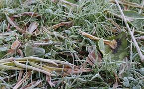 Синоптики Гидрометцентра предупредили москвичей о заморозках до минус пяти градусов