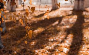 Метеоролог Вильфанд назвал 25 октября в Москве самым холодным днем на предстоящей неделе