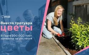В Гааге двести тысяч тротуарных плит заменили на растения