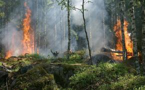 Семеро российских туристов задержаны в Турции по подозрению в поджоге леса