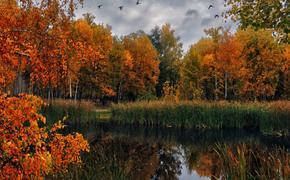 В Брянске планируют вырубить восемь гектар леса без референдума