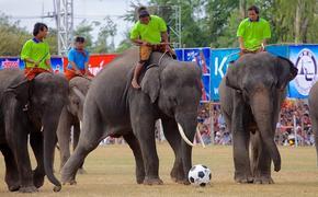Слониха Нелли предсказала победу сборной Германии над Аргентиной