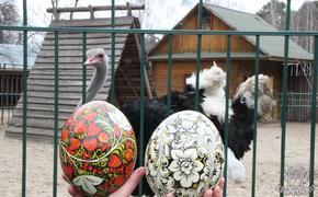Страусиные яйца расписывают в преддверии Пасхи