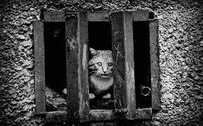 В Тверской области принят закон, регламентирующий содержание домашних животных