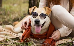 Догхантеры vs романтика: рутина приютов для собак
