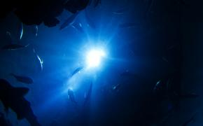 Неизвестные существа инопланетного вида найдены в Марианской впадине