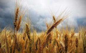 Тверская область и себя накормит, да и других прокормит