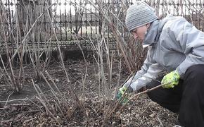 Какие работы сахалинским огородникам нужно делать в апреле