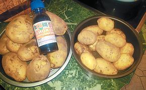Герой дня– картошка