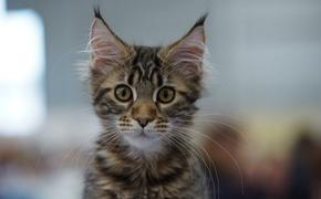 Вакансия для кота с 20-тысячной зарплатой появилась в Нижнем Новгороде