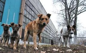 На отлов бродячих собак в Екатеринбурге выделено 32,5 млн рублей