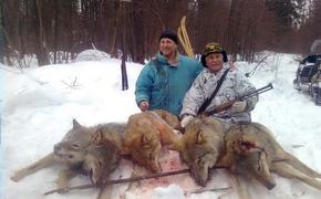 Свердловские власти объявили охоту на волков