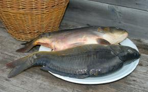 Диетологи: больше рыбы в рационе поможет здоровью