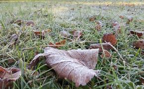 Синоптики предупредили жителей Москвы и Подмосковья о грядущих заморозках