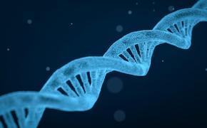 """ДНК """"по обмену"""""""