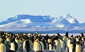 В Антарктике исчезает вид императорских пингвинов