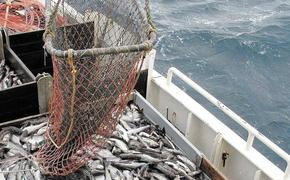 Российские рыбаки ударно отработали на минтае