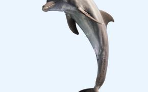 В Крыму появится скорая помощь для дельфинов